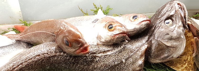 Dónde comer pescado fresco a la brasa