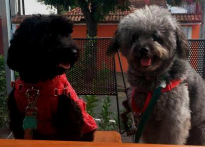 Euskadi con perros